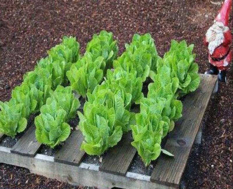 Enjoy Pallet Gardening in Creative Way