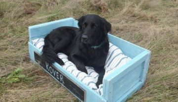 Pallets Creations for Your Pets