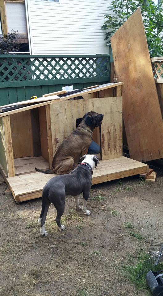 Dog House Made with Pallets Wood | Pallet Ideas
