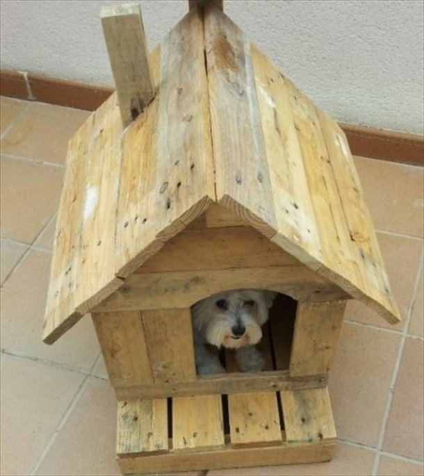 Pallet made dog beds and houses pallet ideas for Cucce cani fai da te