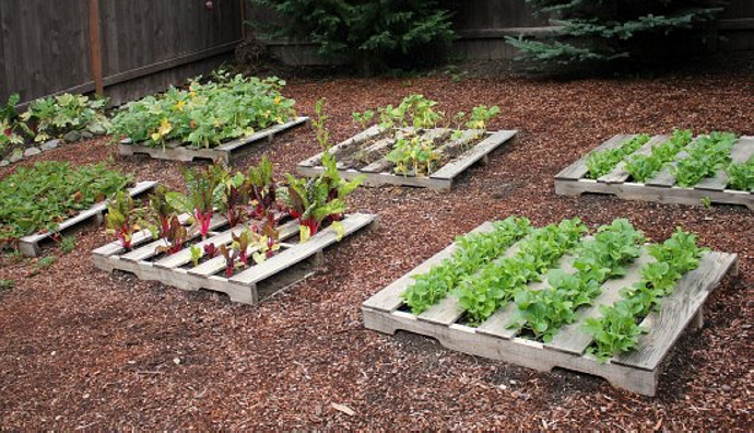 Pallet vegetable garden pallet ideas recycled for Pallet veggie garden