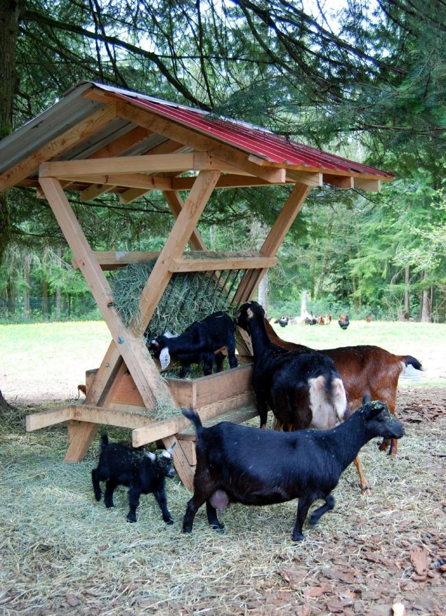 Pallet Cattle