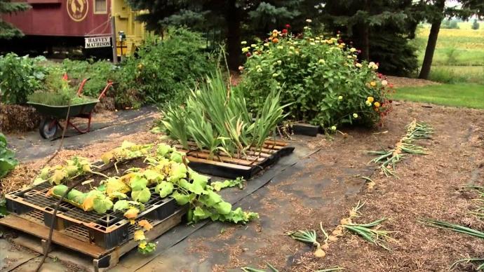 Pallet Vegetable Garden in Backyard