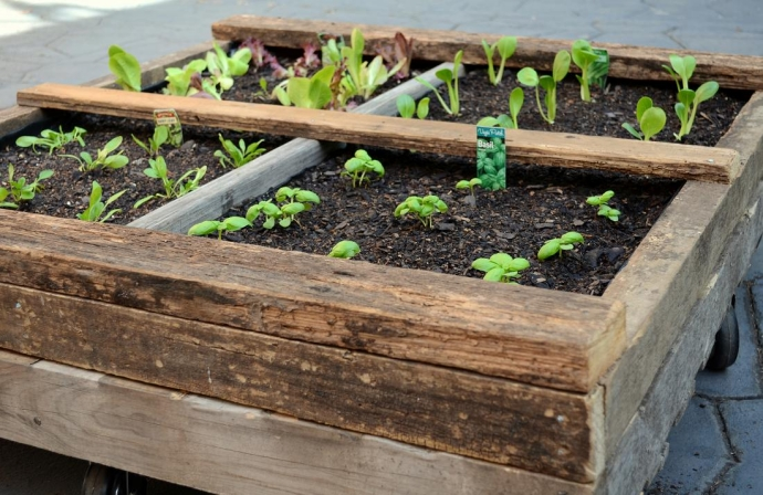 Reused Pallet Vegetable Garden