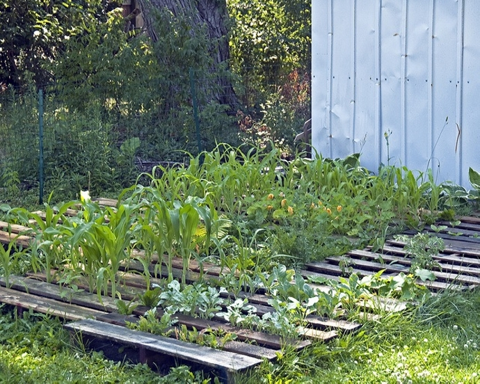 Upcycled Pallet Vegetable Garden