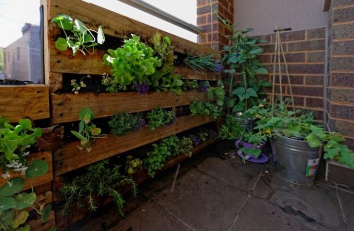 Wall Pallet Vegetable Garden