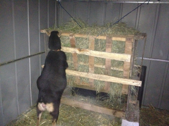 Pallets Hay Feeder Ideas Pallet Ideas