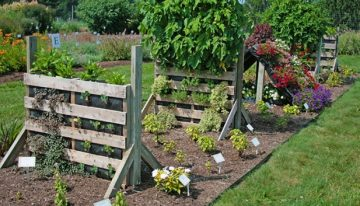 Ideas for Pallet Garden