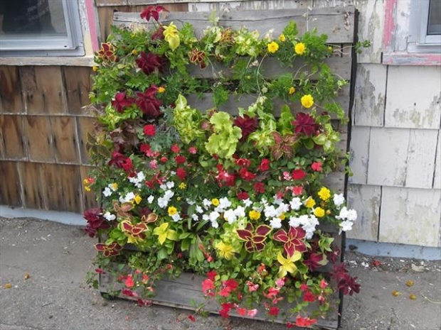 Ideas for pallet garden pallet ideas recycled upcycled pallets furniture projects - Jardin vertical pallet ...