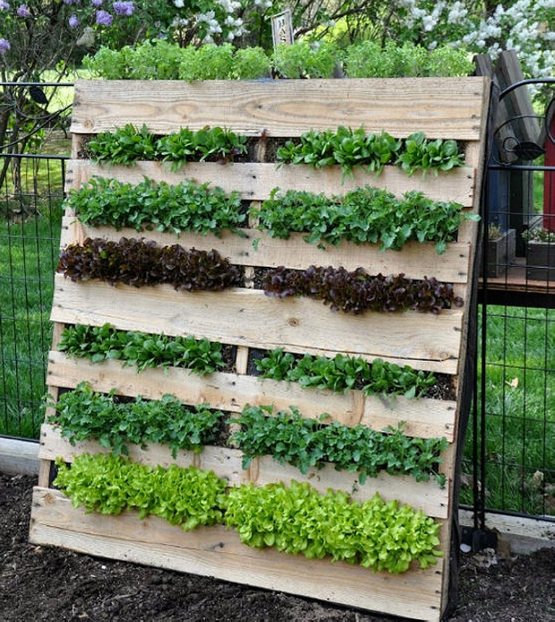 Ideas for Pallet Garden | Pallet Ideas: Recycled / Upcycled Pallets Furniture Projects.